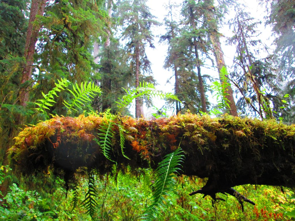 A log covered in a carpet of unique, leafy moss in the Olympic National Park of Washington State. Each leafy blade is one-of-a-kind, yet they all serve a common purpose, as do the many voices in the financial independence movement.