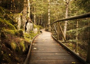 A boardwalk winding through a mossy forest, illustrating the journey to financial freedom made possible by automation through Mint.