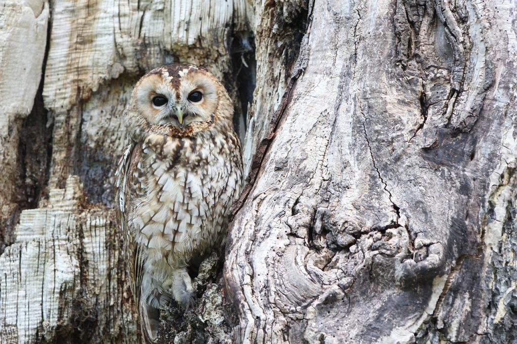 A well-camouflaged owl, illustrating the hidden and hard-to-spot nature of the opportunity cost of debt.
