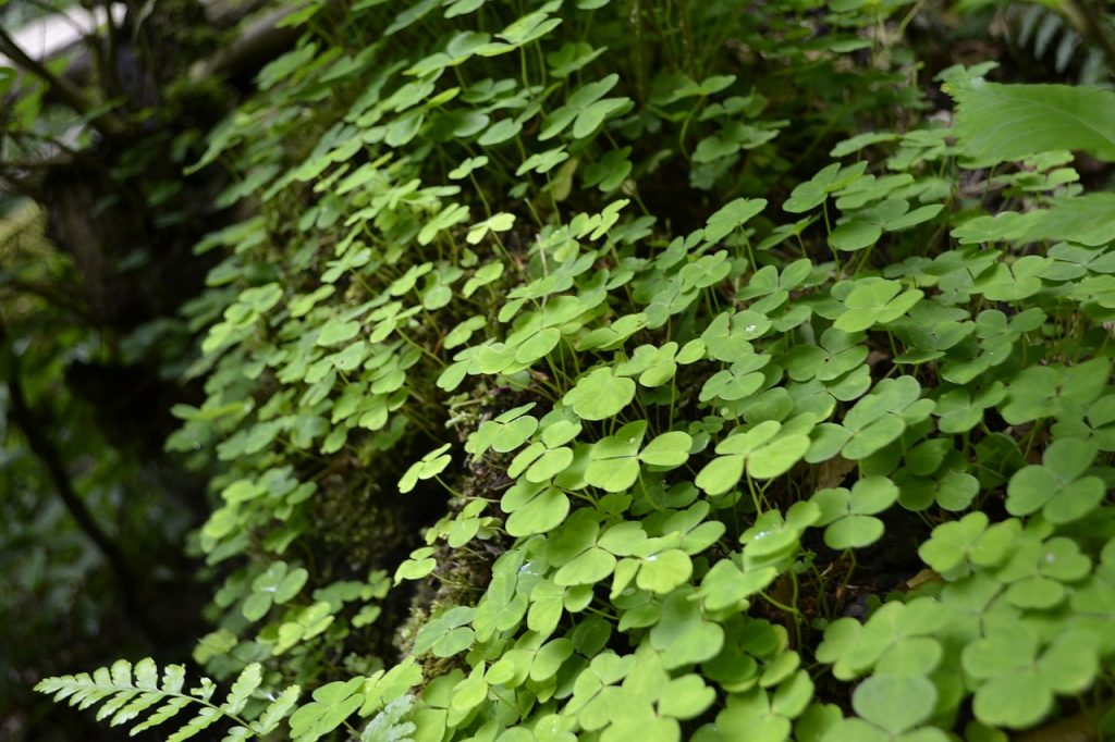 A strip of clover unexpectedly growing on a mossy log, an example of the surprising amount of savings made possible by online bill pay.