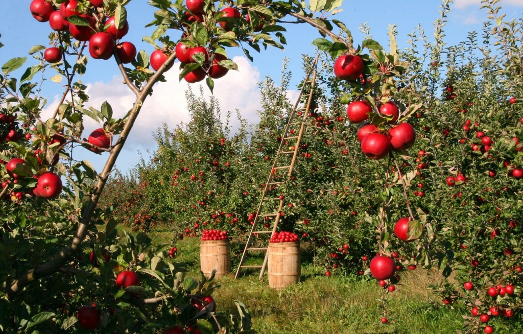 A ladder in an apple orchard, indicating the need to construct a ladder from savings goals to reach some of the finer things in life.