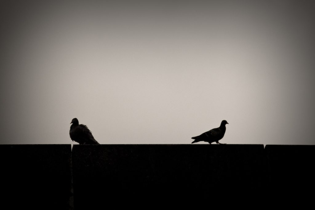 Two pigeons silhouetted on a roofline with their backs to one another, symbolizing a marital disagreement over spending habits.