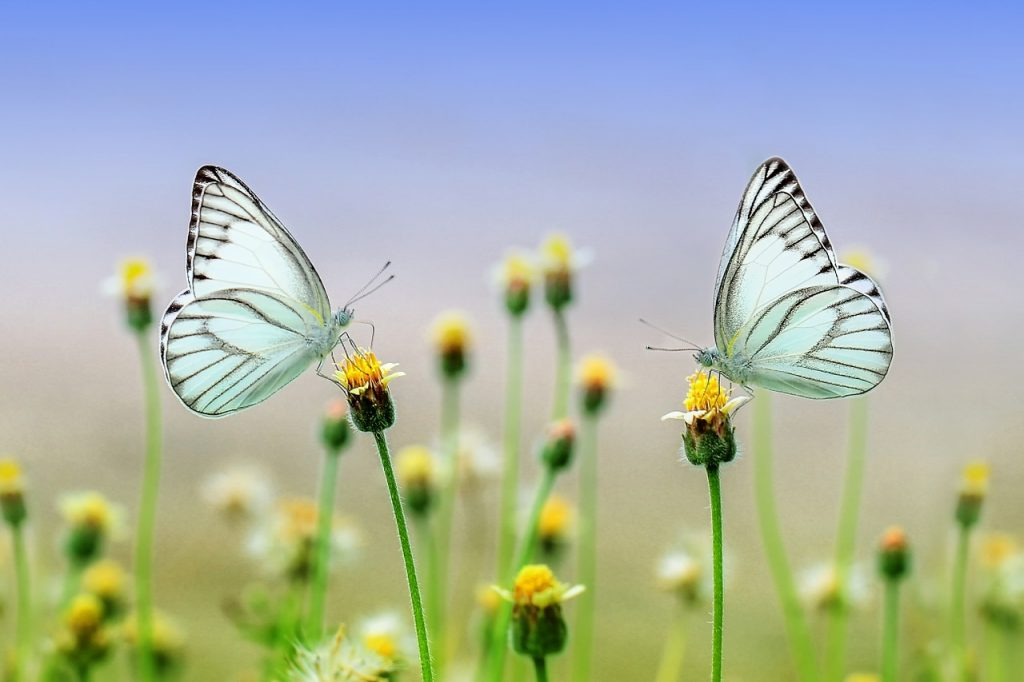Two butterflies sitting atop identical flowers, illustrating the dual financial and environmental benefits of paperless billing and banking.